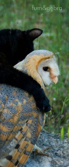 Fum & Gebra, two stars in the open country a special couple. Fum is a lovely black cat and Gebra a kind barn owl. This bird of prey flies far away but lands everytime near Fum, its faithful fri...