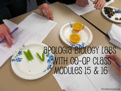 Apologia Biology Labs~ Modules 15 and 16 With Co-op {#HomeSchool High Link-Up} #HSHigh