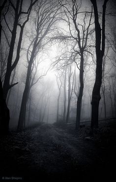 The fog in the image gives a really powerful scene. The single character walking lonely in the woods becoming more and more nervous. It all seems to becoming less and less relaxing there and he will start to quicken his pace to get out of there fast.