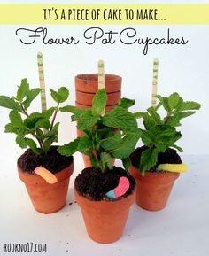 Cupcakes Baked in Terra Cotta Flower Pots | Rook No. 17
