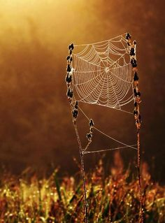 so pretty -fiber cobweb Land Art, Spider Art, Spider Webs, Mother Earth, Mother Nature, Foto Macro, Itsy Bitsy Spider, Fotografia Macro, Science And Nature