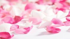 2682 best pink flowers images on pinterest in 2018 beautiful pink flowers and rose petals mightylinksfo