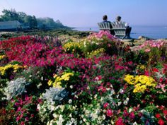 Couple Reading at Ocean Point Shoreline, Flowers in Foreground, Maine Photographic Print by John Elk III at AllPosters.com