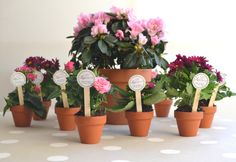 Mini flower pot DIY favors