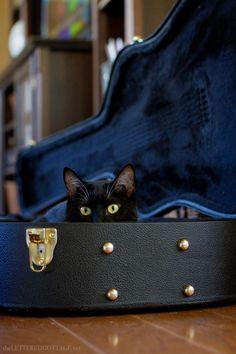 Tuxedo_Cat_Guitar_Case_Lettered_Cottage