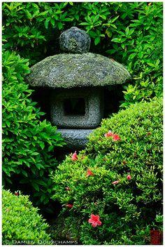 Stone lantern hidden in rhododendrons, Anraku-ji temple