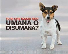 PETALI DI CILIEGIO ...per coltivare la speranza: In difesa degli animali: fermiamo la zooerastia!