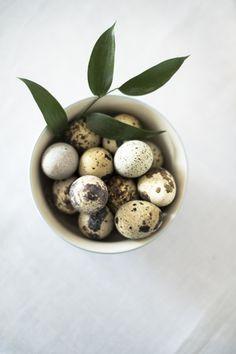Easter table for children - Der perfekte Ostertisch für Kinder Mehr Infos unter ckahr.com/blog #bloomingville #childrendishes #Kindergeschirr #Geschirr #kids #dishware #quaileggs