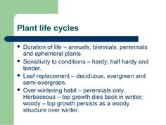 Plant life cycles  Duration of life – annuals, biennials, perennials and ephemeral plants  Sensitivity to conditions – h...