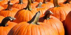 Ingredient of the week: pumpkin | canada.com