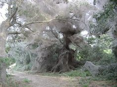 Jack would go crazy seeing this! He's obsessed with spiders and their webs!Spider webs !