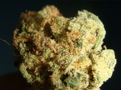 Amnesia , super strong ---Bud of the day
