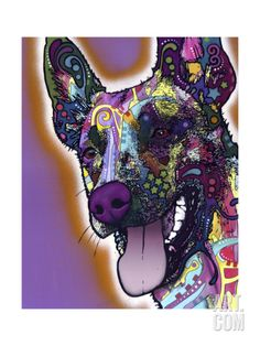 Malinois Giclee Print by Dean Russo at Art.com