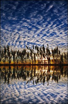 ✯ Reeds on the Darenth .. by Adrians_art✯