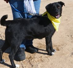 Meet Donnie!    This adorable 11 month old boy was sitting in the shelter, hard to believe no one noticed him! He is just the nicest pup!    www.labradorsandfriend.org    Donnie is a happy, go lucky boy, who loves everyone. He is on the smaller side, has some leash manners and is eager to please! Donnie has a playful personality but also a calm side to him. He is just about perfect!