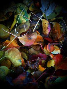 Colors <3