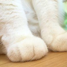 bellcat @1room1cat 찹쌀떡~#cat...Instagram photo | Websta (Webstagram)
