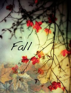 Fall Equinox Meditation Tomorrow, September 23, 2015. Use any of the ideas on the board or create your own. Blessings