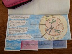 Cell Cycle Book - Ms. Bautista 2013-2014