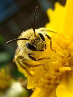 les abeilles sont essentielles à la vie sur terre