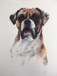 Boxer dog in watercolour by artist Jane Davies