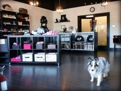 Image result for pet spa