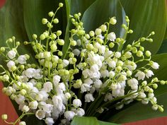 ... the section: Pictures of lily of the valley, snowdrops and snowflakes