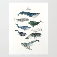 Animal chart featuring 8 types of whales: Humpback, Gray, Blue, Right, Bowhead, Fin, Beluga, and Sperm whale.
