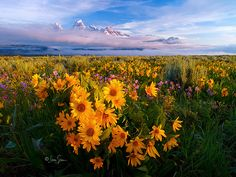 Grand Teton Sunrise by ~jessespeer on deviantART