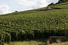 The Clos Des Lambrays vineyard. Credit M. Jean-Louis Bernuy  52 Places to Go in 2015 - NYTimes.com