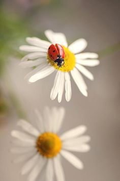 Lady by Mirka Wolfova on 500pxIdeas, Nature and Art More Pins Like This At FOSTERGINGER @ Pinterest