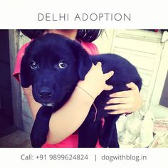 Three adorable littleSpitz-mix puppies (mother is a Spitz) 2 months old are ready for adoption. #Delhi They are healthy as they are home-reared andhave been de-wormed and given the first 6X1 vaccination. Please call 9899624824if you'd like toadopt one of these babies. Pre-adoption house checks and other adoption formalities are mandatory.