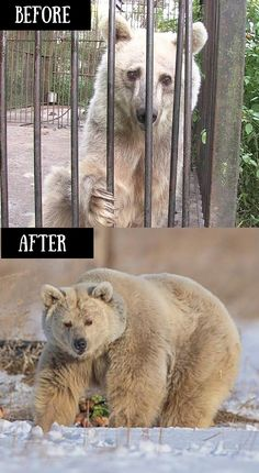 She was trapped in a cage for 30 years, but look at her after her first hibernation! Amazing rescue story.