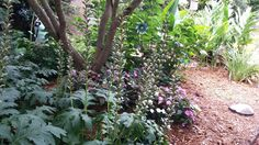 Riverbank Zoo, Plants, Plant, Planets