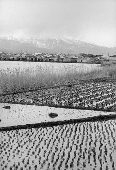 Rural Japan, 1955 by Hiroshi Hamaya