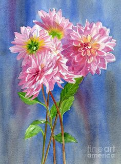 Pink Dahlias With Blue Gray Background by Sharon Freeman