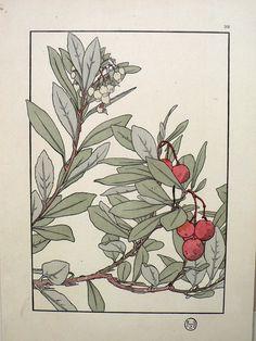 Jeannie Foord - Plate 38. Decorative Flower Studies. Paris: E. Greningaire, 1904. http://fineantiqueprints.com/Botanicalsearly20th/FoordJeannieArtNouveau