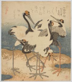 """Kubo Shunman - A superb surimono showing a group of five cranes on a split of sand. The tancho ( """"red crest"""" ) Japanese Crane, Grus japonensis, is the second rarest crane in the world, migrating to East Asia in the fall to spend the winter. There is also a resident flock in Hokkaido. Much loved by the Japanese, the crane was a symbol of luck, longevity and fidelity."""