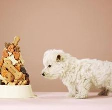 Cute Bday cake for your pup-- Cool idea!