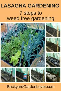 Ever wondered if you could magically have a weed free garden? Lasagna gardening can make that wish a reality. With only 7 easy steps, you can enjoy weed-free gardening.