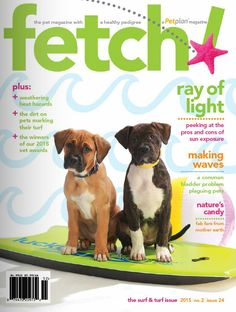 Sniff out the latest pet health tips to protect your best friends in the  Surf & Turf issue of fetch! magazine from Petplan pet insurance!