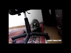 Funny cat video. Cats attack