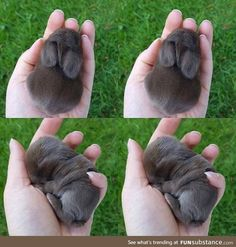 So cute sleeping bunny isnt it? Tag a bunny lover! Via So cute sleeping bunny isnt it? Tag a bunny lover! Cute Baby Bunnies, Baby Animals Super Cute, Cute Little Animals, Cute Funny Animals, Cute Cats, Cute Babies, Cutest Animals, Baby Animals Pictures, Cute Animal Pictures
