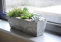 sukulenty_skrzynka, rośliny do biura