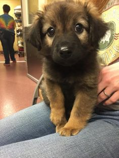 Baby German Shepherd for the win!