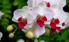 Nossas plantinhas são amadas e sempre alegram o ambiente com teu perfume e beleza. É uma pena quando nossas plantas começam a morrer ou a r...
