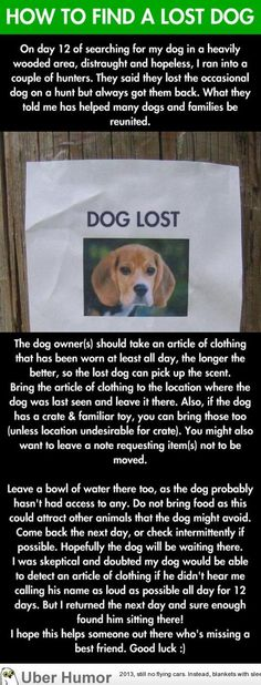 How to find a lost dog. I'll pin it just in case, given that I would be unable to read or move if one of my children was lost.