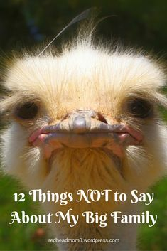 #FridayFrivolity - 12 Things NOT to Say About My Big Family