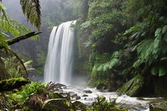Photo about Hopetoun Falls, a temperate rainforest waterfall in Victoria, Australia. Image of misty, waterfall, river - 10283783 All Nature, Nature Images, Nature Pictures, Belize Barrier Reef, Trinidad, Bible Verses About Nature, Marie Von Ebner Eschenbach, Les Cascades, Beautiful Waterfalls