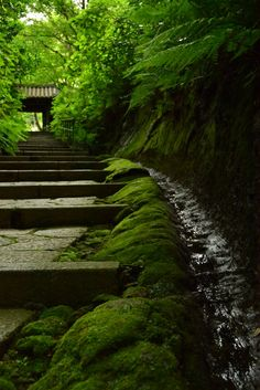 Zuisen-ji Temple, Kamakura, Japan 瑞泉寺 鎌倉